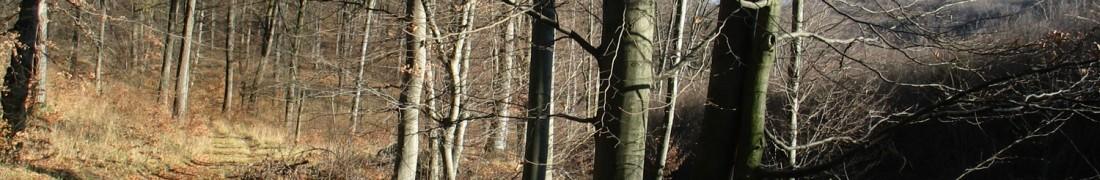 Novemberi erdei tájkép a Bükkben.