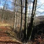 A Remete-völgy bükköse Kisgyőr közelében