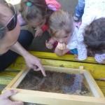 A szorgos méhek életét vizsgáljuk