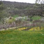 Tavaszi hangulat a Galyán