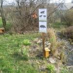 Süntanya és békamenedék (és a kerti tó)