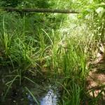 A Tócó-patak Józsa alatt (Fotó: Koczka András)