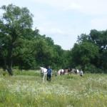 Hazafelé menet még megnéztük a Kékmező fás legelőjén legelésző lovakat is