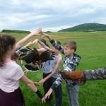 Játék a harris héjával