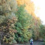 A letermelésre kerülő erdő