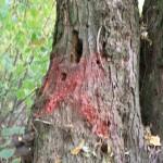 Odvas fa megjelölése