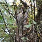 Odvas fa, potenciális denevérélőhely
