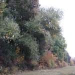 A védett legelő melletti fennmaradó erdősáv, lehetséges refúgium