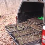 Védett növények ültetésre várva